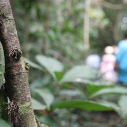 Unterstützung für neues Regenwaldprojekt gesucht!